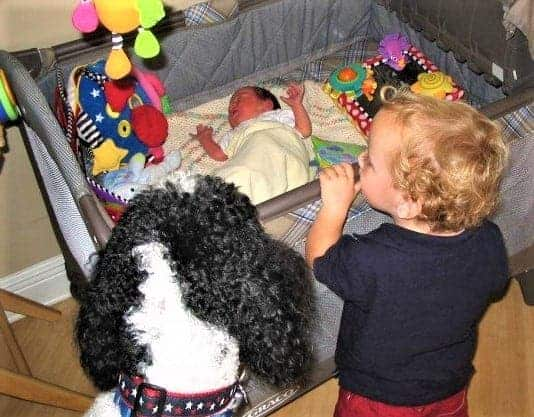 Introducing Baby to Dog | How to successful baby-proof your dog!