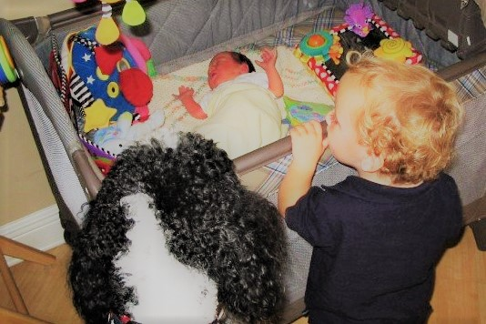 Baby-Proof Your Dog – How to Introduce Your Baby to Your Dog