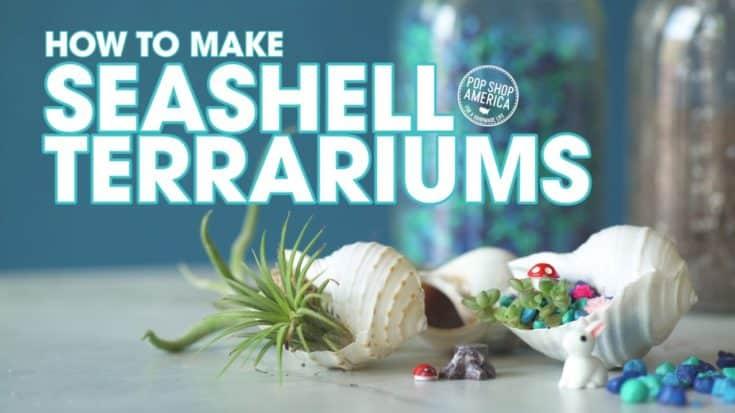 Seashell Terrariums