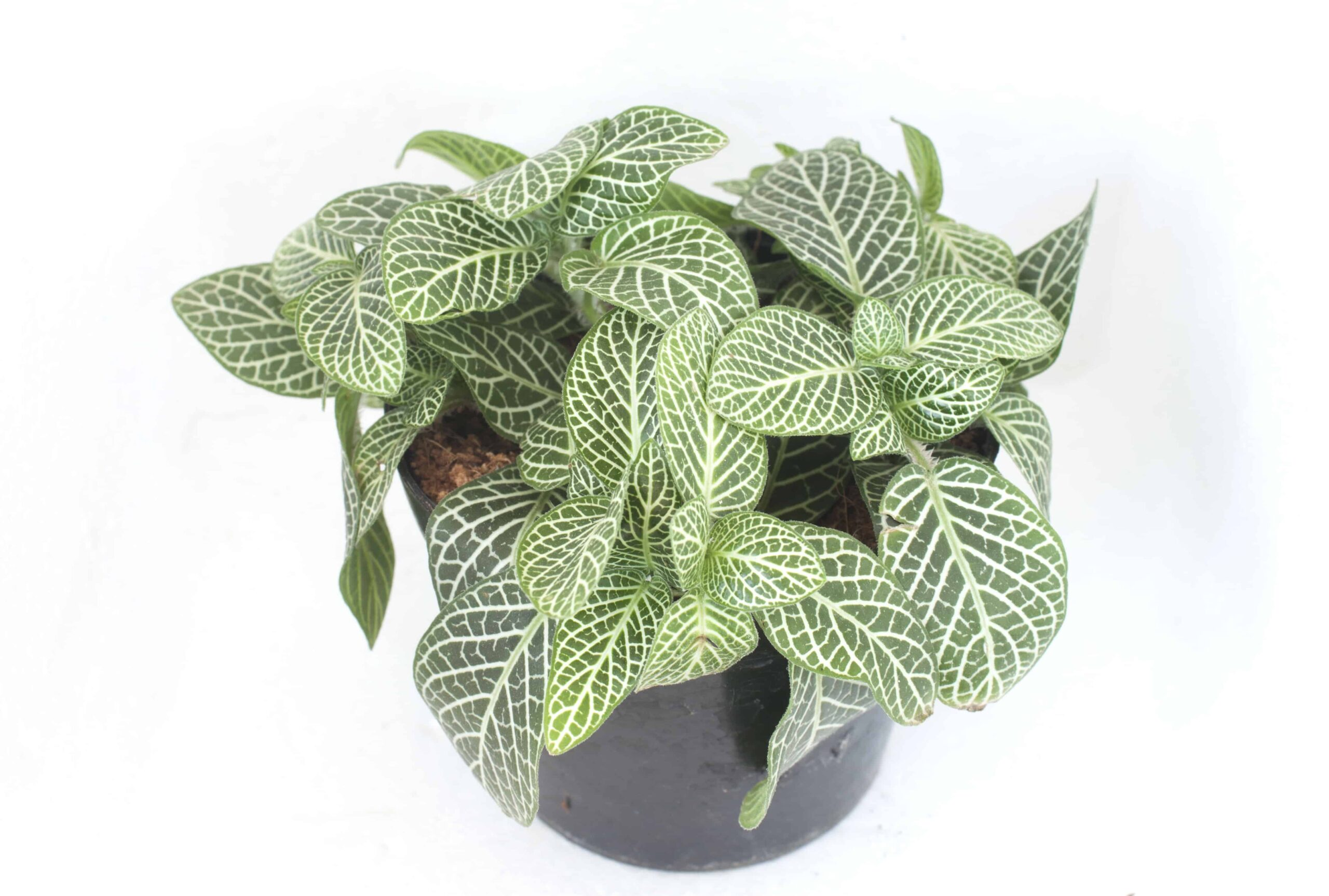 10 Rare Unique Houseplants You Will Love Includes Care Instructions