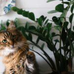 Cat safe houseplants