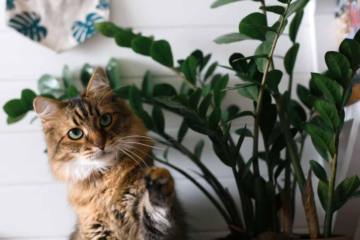 15 Low Maintenance Plants That Are Safe For Cats 2021
